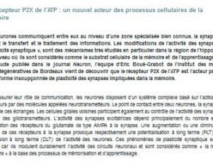 Boue-Grabot récepteur P2X ATP