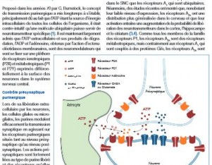 boue-grabot purines neuromodulation