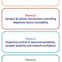 Baufreton ; Georges ; Réseau élargi des ganglions de la base ; Maladie de Parkinson ; Dopamine ; Plasticité Synaptique ; Maladies neurologiques et psychiatriques