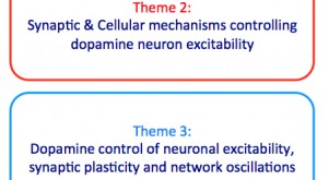 Baufreton ; Georges ; Neuronal assemblies ; Dopamine ; Neurological and psychiatric disorders ; Extended Basal ganglia ; Synaptic plasticity ; Parkinson's disease